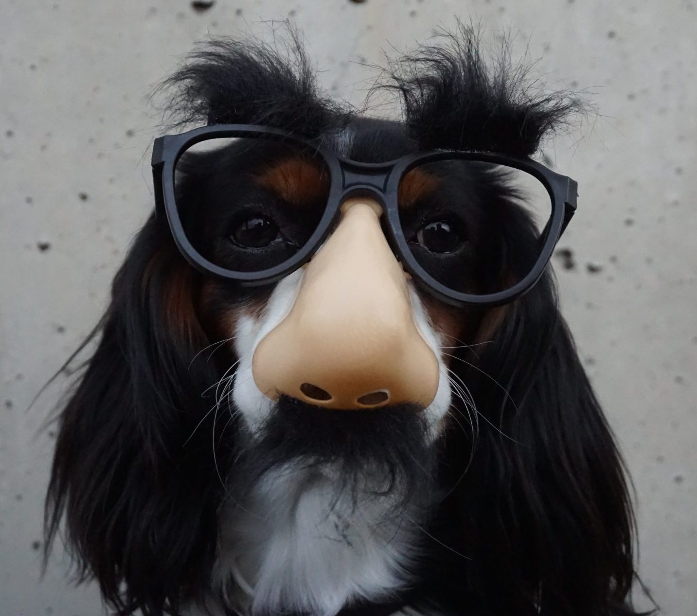 dog wearing fake nose and glasses